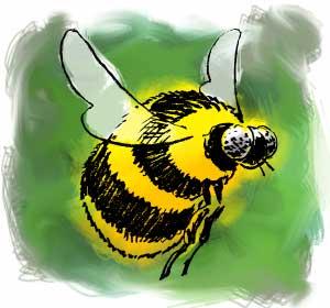 [ bee ]